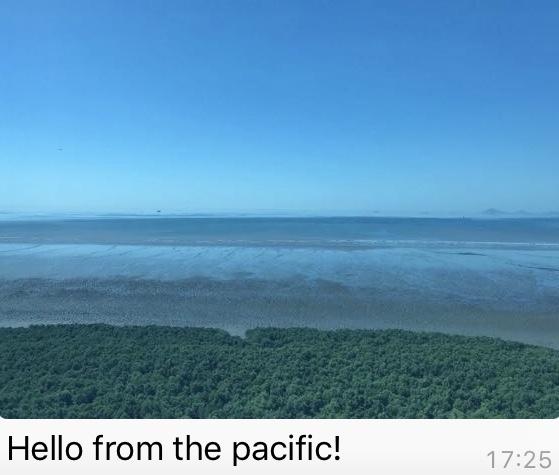Pacifichello