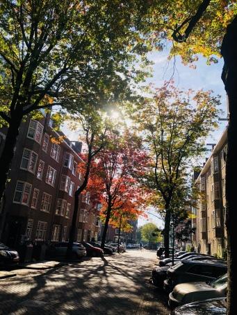 Autumnvivid